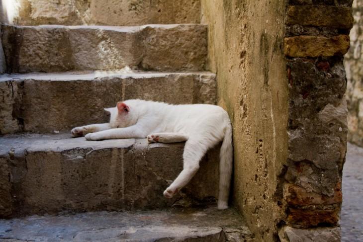 gato acostado en las escaleras