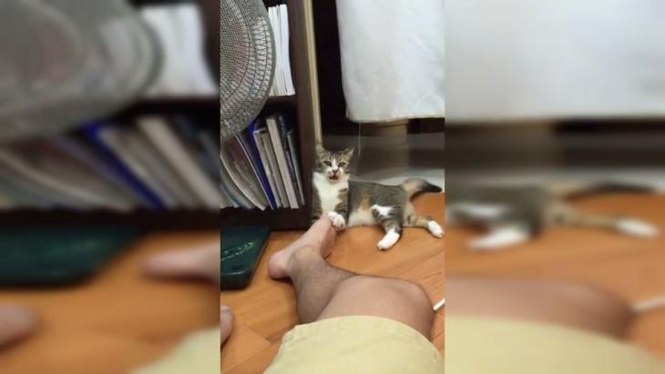 gato mordiendo los pies de su dueño