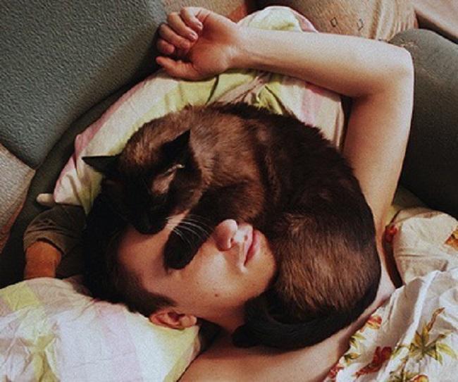 gato dormido sobre la cara de su dueño