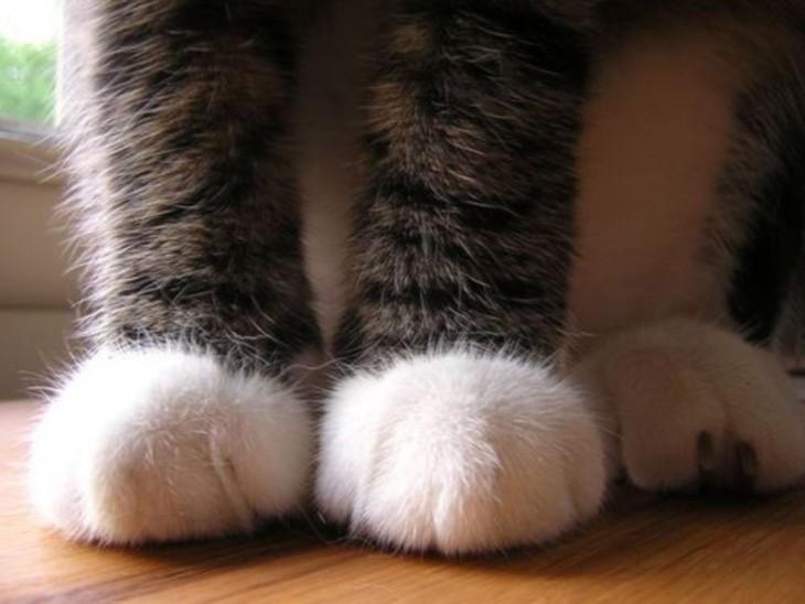 gato con patas lindas