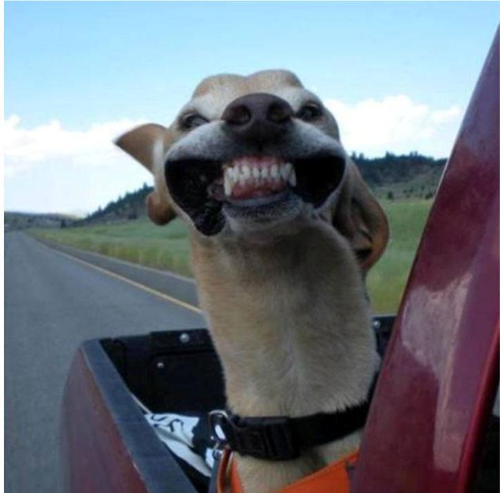 perrito que se le mueven los cachetes en con el aire
