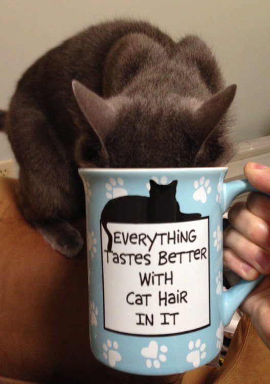 gato tomando de la taza de su dueño cafe