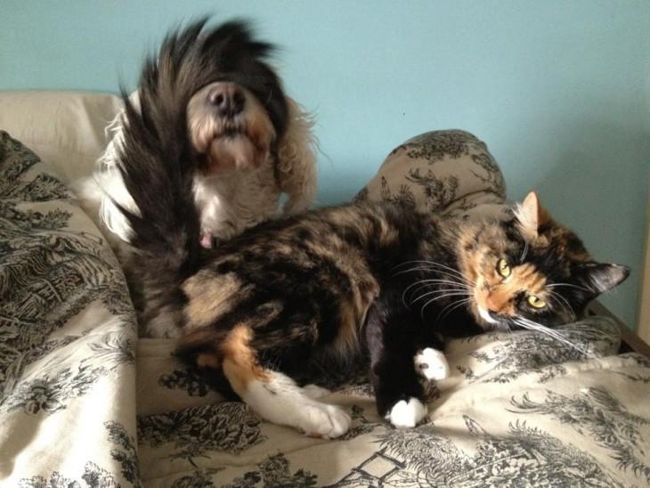 gato con la cola encima del perro