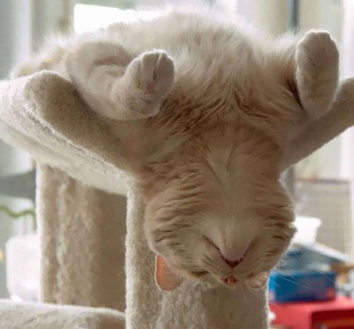 gato dormido sobre su cosa esa donde hace ejercicio para los departamentos pequeños