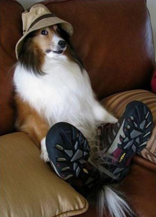 perro disfrazado de su dueño