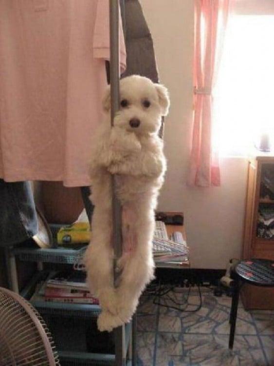 perro trepado en un tubo mientras le toman la foto