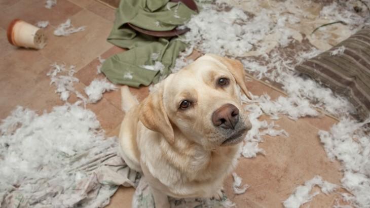 perro con la almohada destruida por el desgarrada por todo el piso