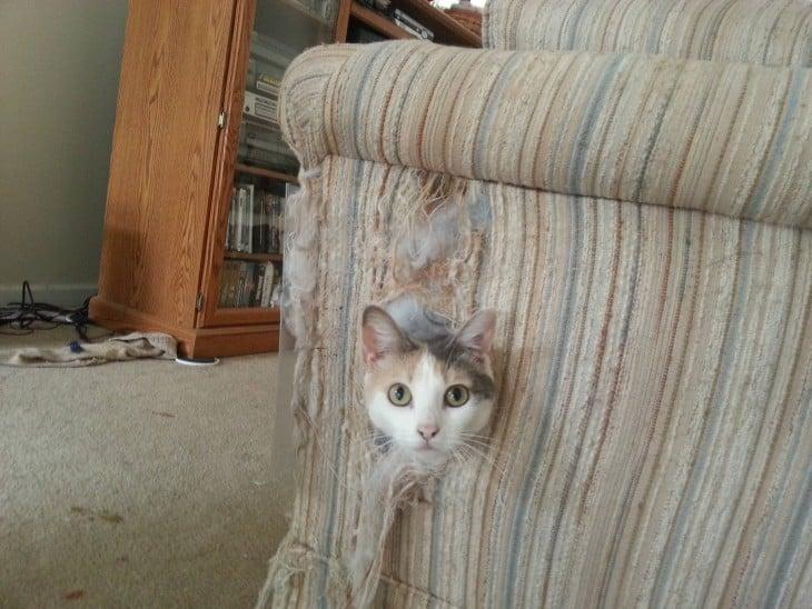 o gato quebrou o sofá e puxou sua cabeça para fora de um lado com o tecido rasgado