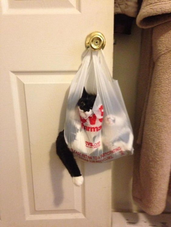 gato metido en la bolsa de los peluches collgado en la puerta