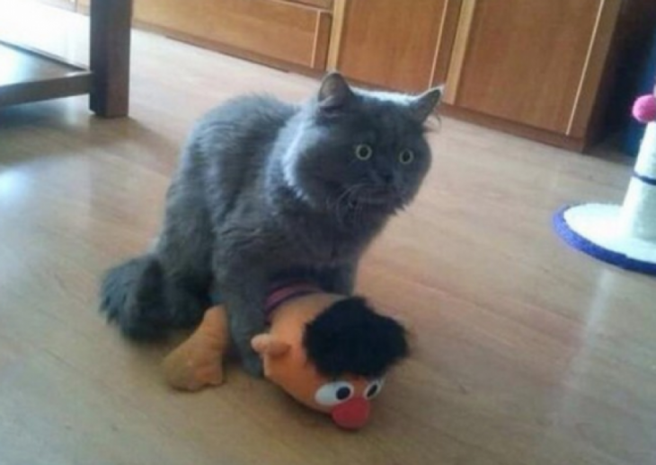 gato jugando con un peluche de su dueño