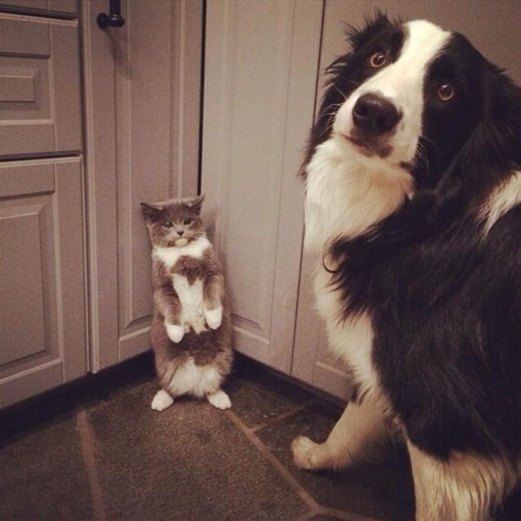 perro amedrentando a gato
