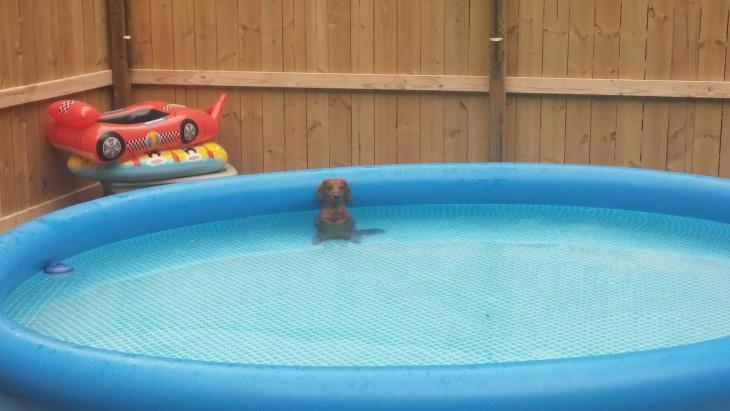 cão em uma piscina de borracha, enquanto seus duelños encontrados