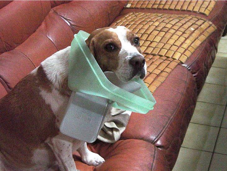 perro con la cesta de basura atorada en el cuello