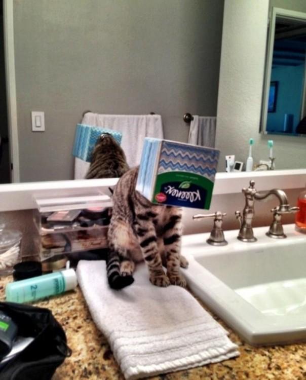 gato con los klennex encima de la cara