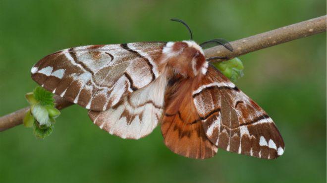 Mariposa mitad macho y mitad hembra