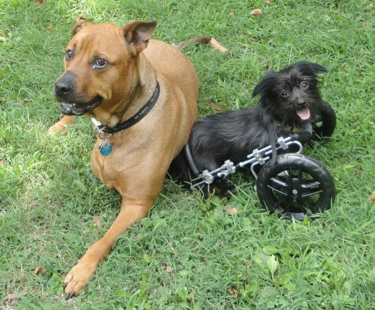 dos perros acostados en un jardín