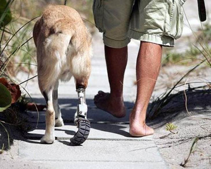 pies de una persona a un costado de un perro con una prótesis en una de sus patas traseras