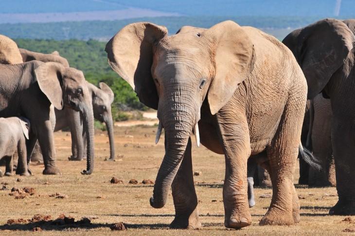 fotografía de varios elefantes en su hábitat natural en África