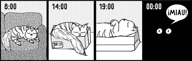 comic sobre las horas de dormir de un gato