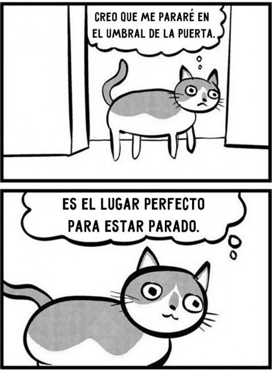 comic sobre lo que piensa un gato
