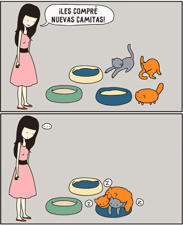 comic de cuando le compras una cama a un gato y en realidad como la usa