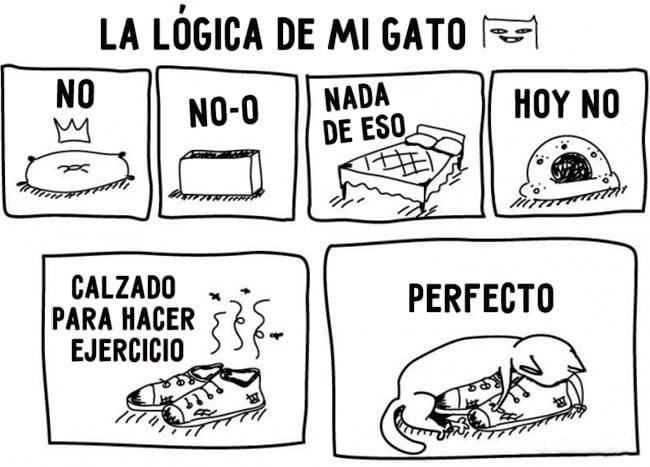 comic sobre la lógica de un gato