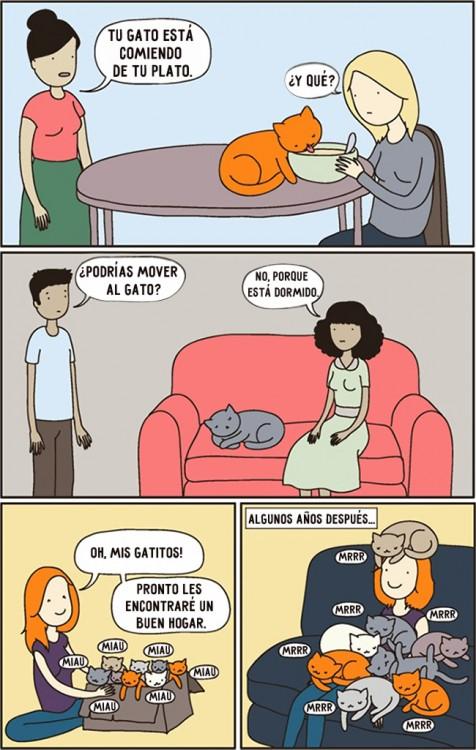 comic sobre la logica de como duermen los gatos
