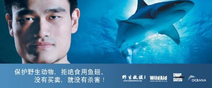 Yao Ming contra la caza furtiva de tiburones. 77 MILLONES DE TIBURONES SON CAZADOS ANUALMENTE EN CHINA PARA COMER SU ALETA