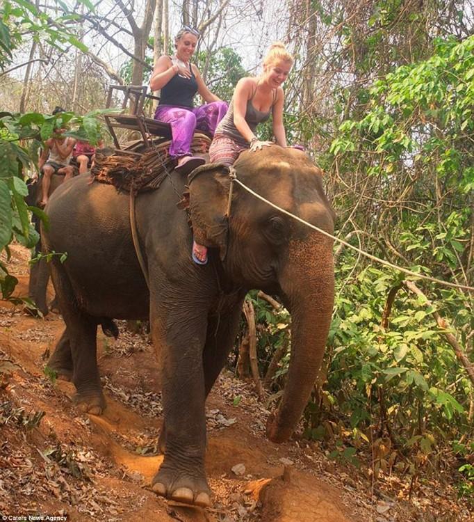 Dos chicas arriba de un elefante en la selva