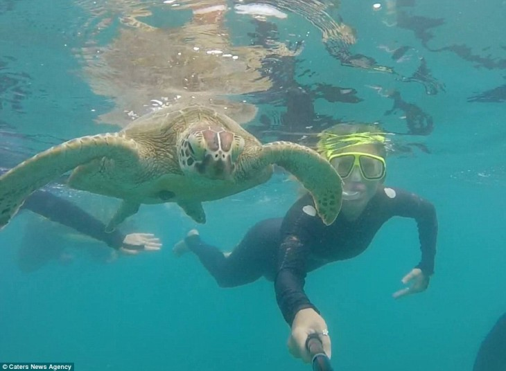 selfie de una chica buceando a lado de una tortuga