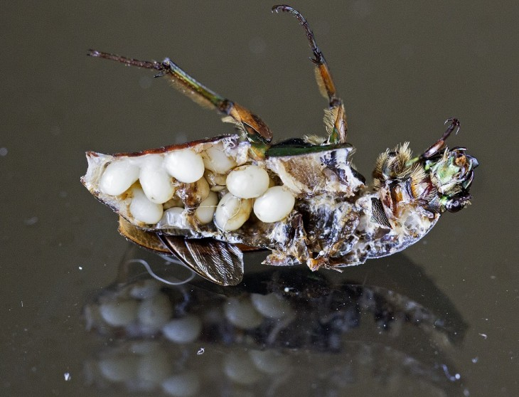 interior de un insecto partido a la mitad