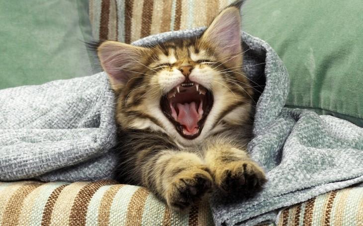 pequeño gatito con el hocico abierto acostado en un sillón