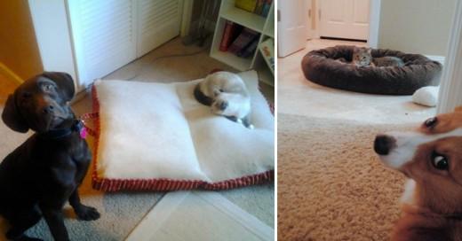 Los gatos tratando mal a los perros