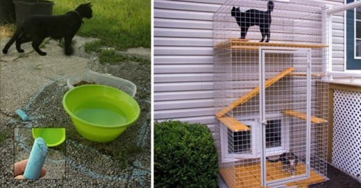 Ideas geniales para tus gatos