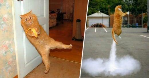 Imagines de gatos captadas en el preciso momento de hacer cosas curiosas