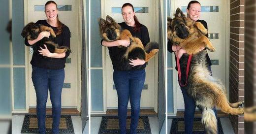 El sorprendente desarrollo de estos hermosos perritos