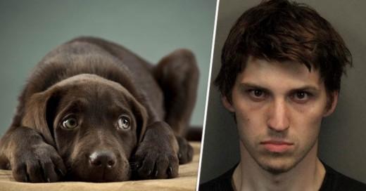 Una Condena sustanciosa a este hombre que sin piedad mato a perros de una forma enferma
