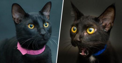 El mito el Gato negro develado