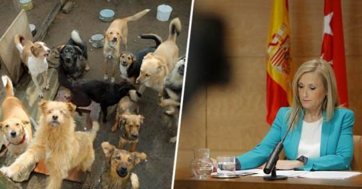 Una gran iniciativa de ley de castigar a los seres humanos malvados que maltratan a los perros