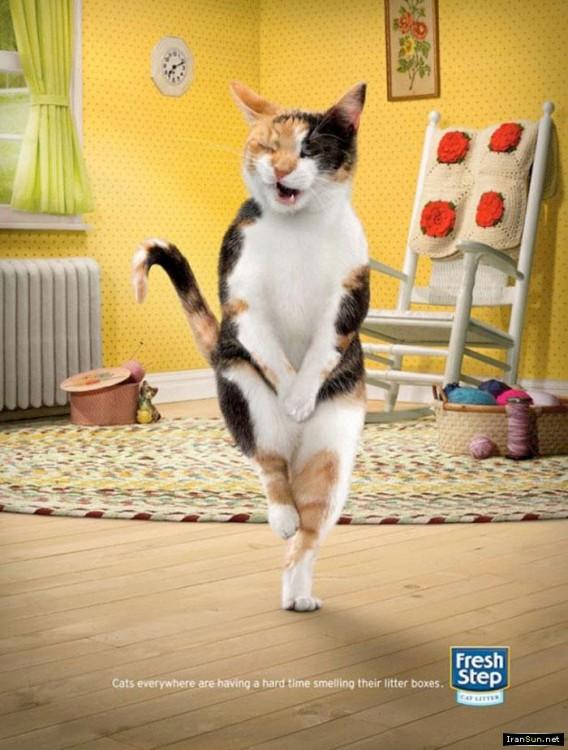 gatito dentro de una publicidad de Fresh Step