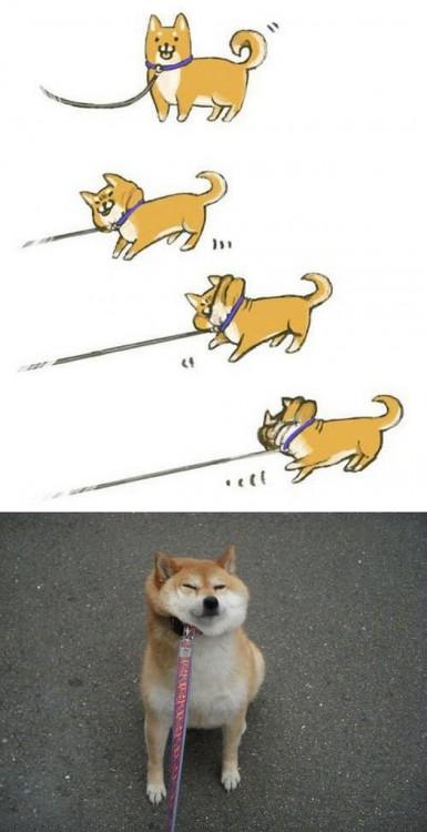 ilustración de un perro shiba ahorcándose con una cadena para perro