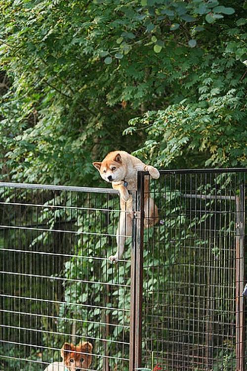 perro atorado entre una reja