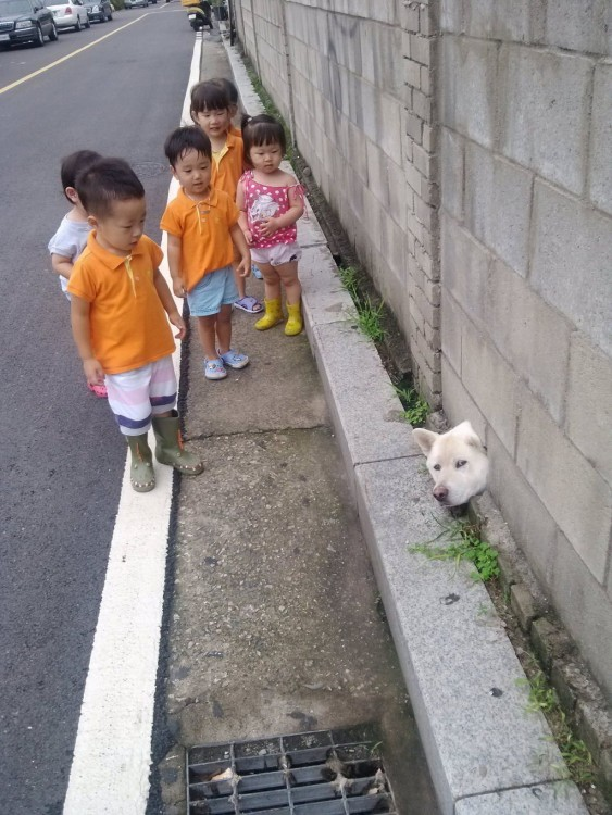 niños viendo la cabeza de un perro shiba atorado en una pared