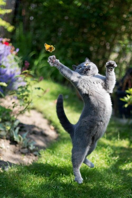 un gato saltando en un jardín intentando atrapar una mariposa