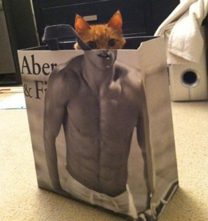 gato dentro de una bolsa con la figura de un hombre