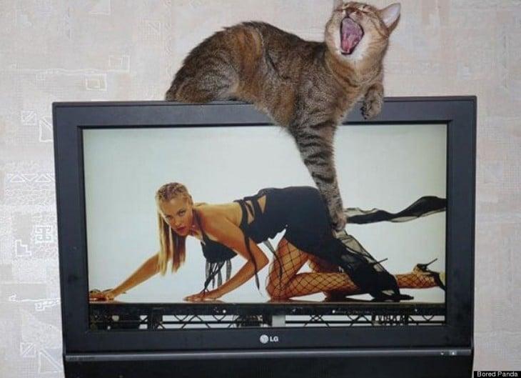 gato arriba de la pantalla de una computadora simulando que le pega a una chica