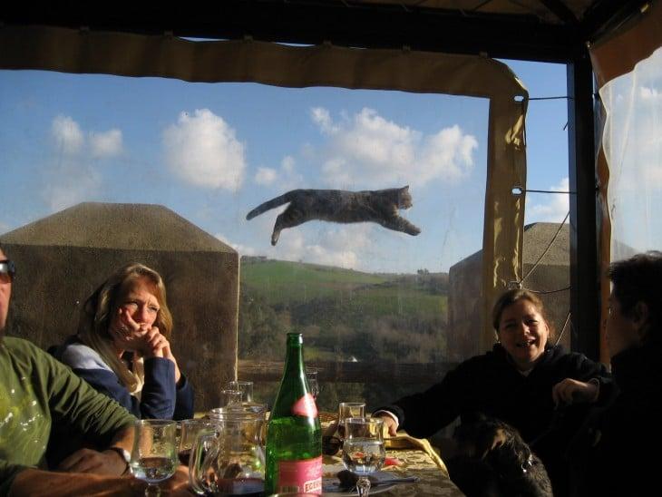 personas comiendo y afuera de una ventana un gato saltando
