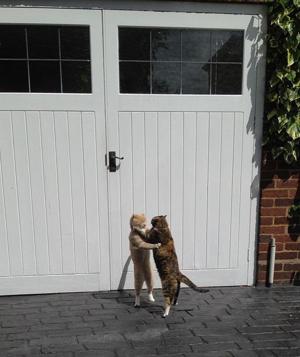 dos gatos parados en dos patas frente a un portón en la calle