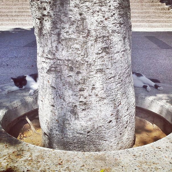 un árbol en donde un gato lo rodea
