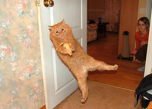 gato brincando con algo de comida entre sus patas